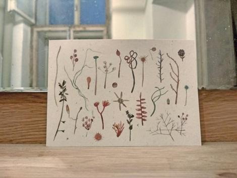 pohled rostliny